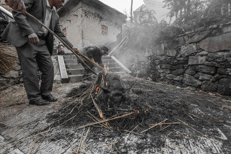 China Yunnan ,China Ziseetheworld Ziwang Villager Village Life Local Food Culture Pig villagers smoke then kill a pig to sacré to their ancestors on tomb sweeping festival. Tomb Sweeping Festival
