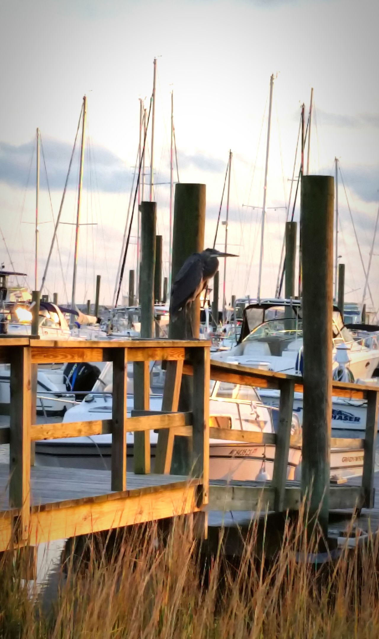 Nautical Vessel Harbor Transportation Sea Water Moored Mode Of Transport Sailboat Mast Outdoors No People City Beach Sailing Ship Day Close-up Yacht Birds Wildlife Bird Photography Bird Watching