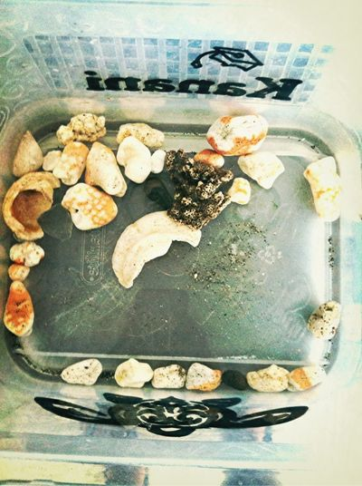 The shells; Coral; Rocks & glass that mr. Brandon & I picked at the harbor for All of five mins!