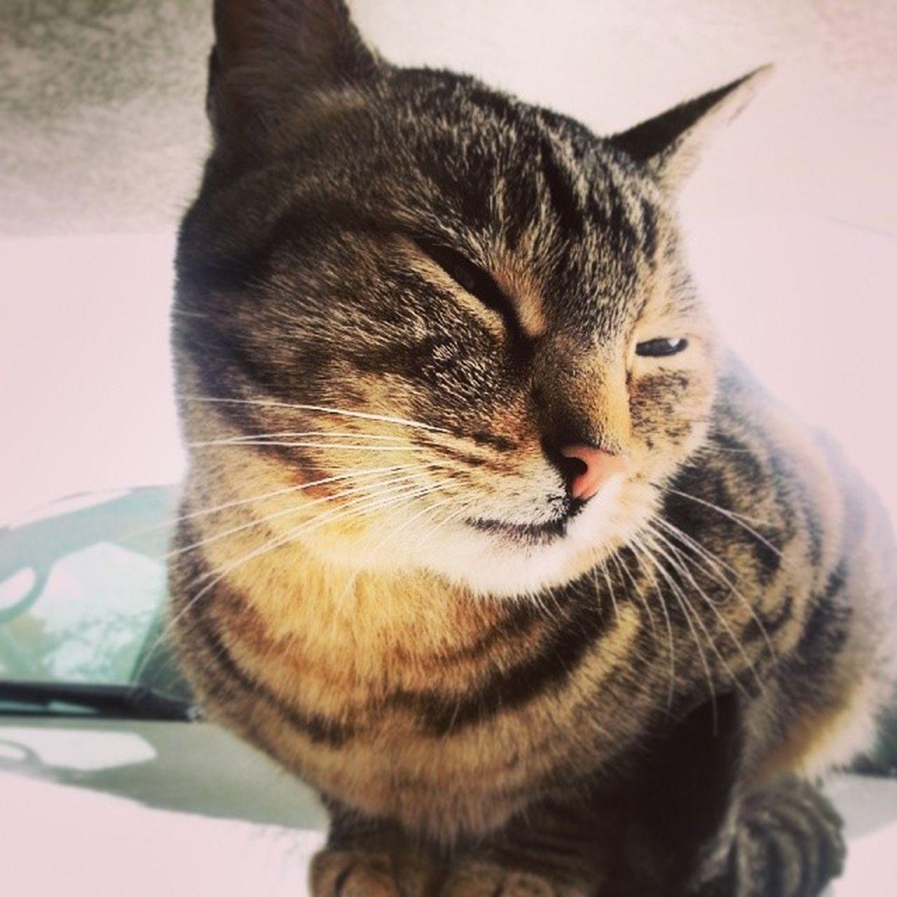 Loves when Sleepy visits. Notmycat Neighborscat Meow Catsofinstagram