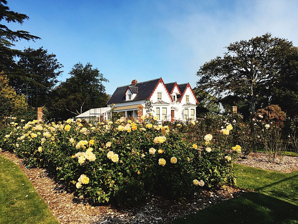 Roses Rose Gardens Old House Flowers,Plants & Garden Flora Fauna Awesome Day Nature