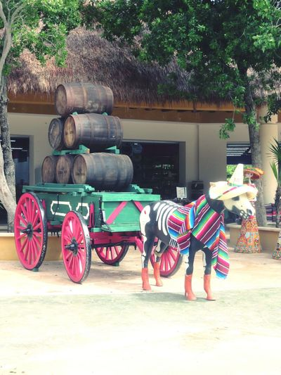 On The Move Working Animal Horsedrawn Colour Colour Of Life Mexico
