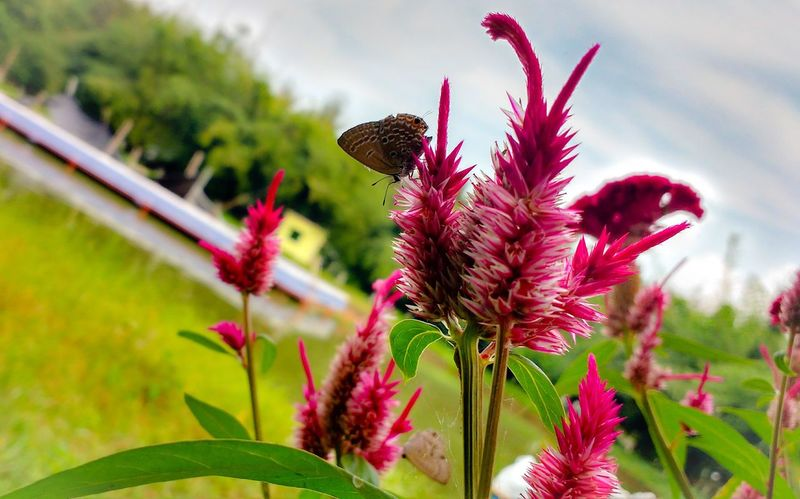 Butterfly :) Flower Growth Fragility Beauty In Nature Focus On Foreground Blooming Petal Insect Green Color