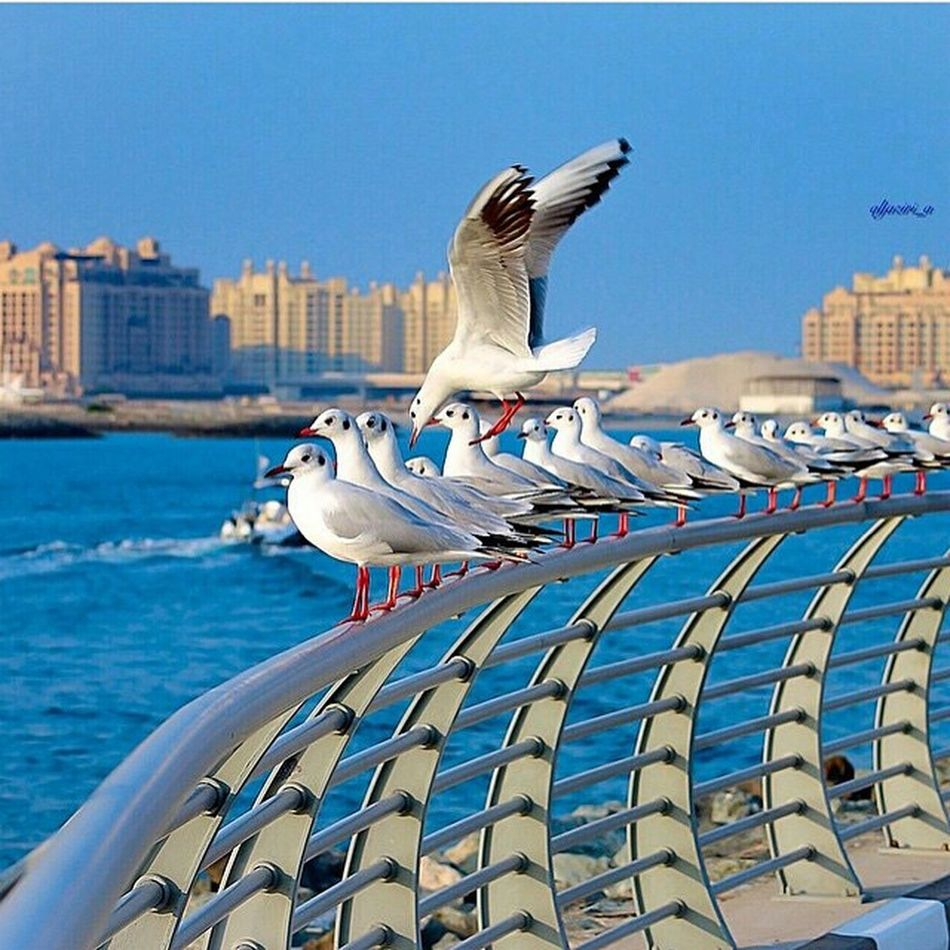 Dubai DubaiMall Dubaicity Followme BakytZhanKZ