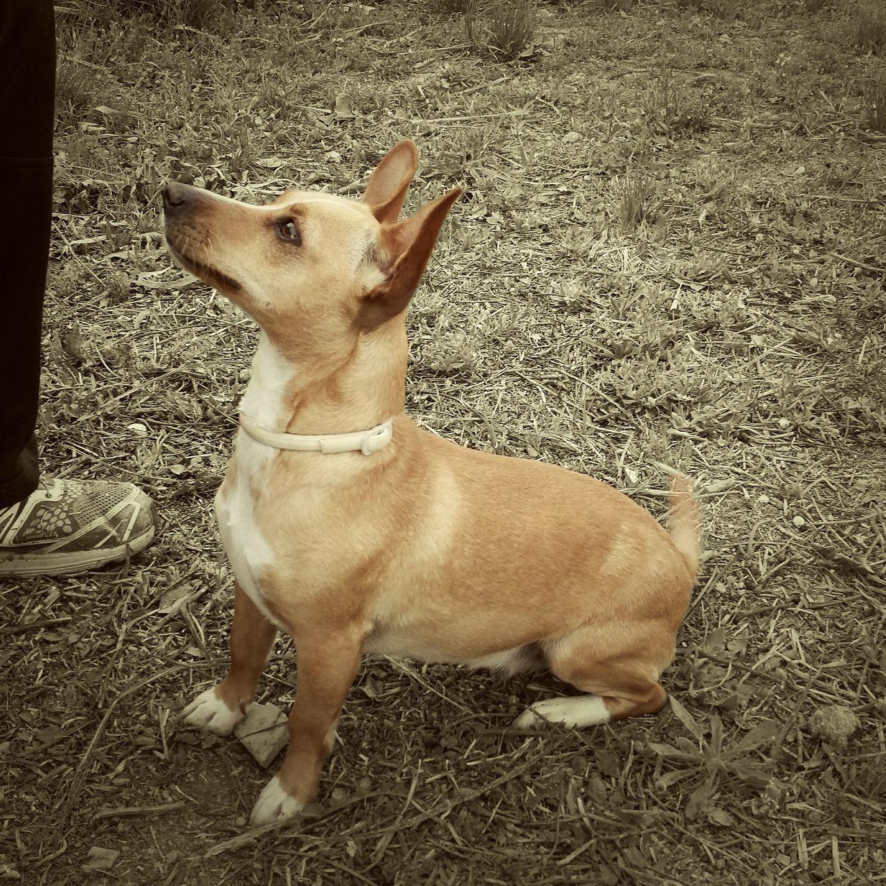 Dogs EyeEm Best Shots Streamzoofamily Art Is Portable With Caseable Mi Pollo Y Yo La Mancha Foto España