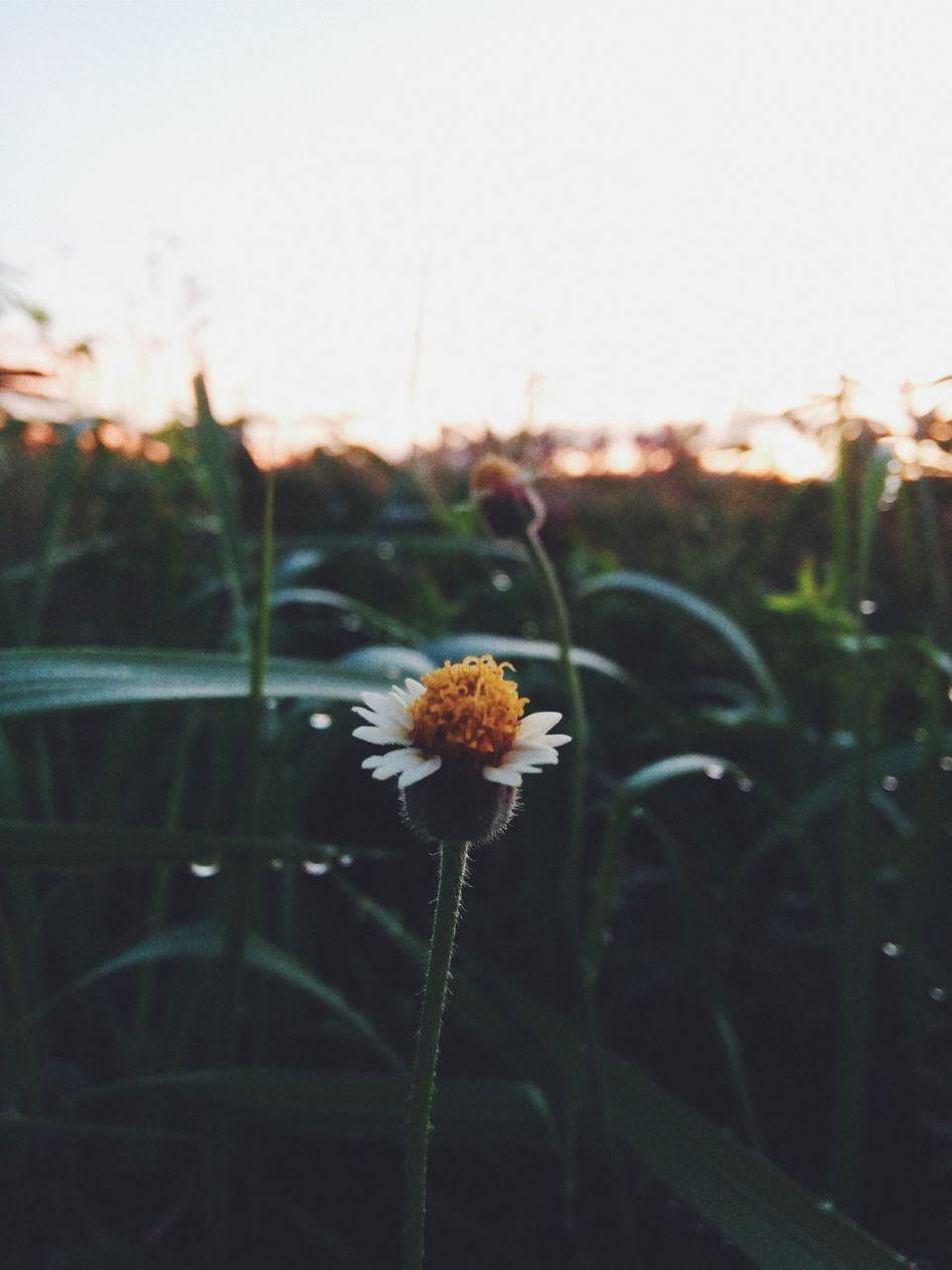 """""""Sunrise Floral"""" Flowers Morning Scene Wet Nature Soft Light"""