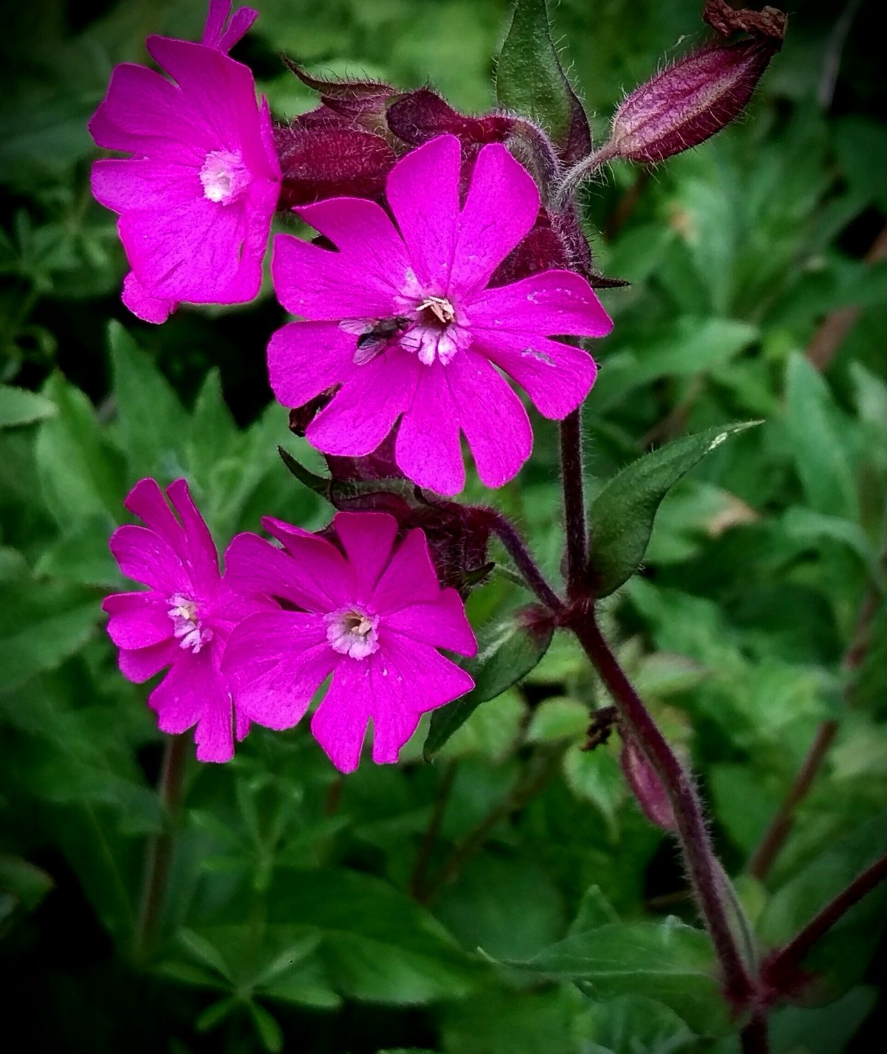 Flower Beauty In Nature Fragility Nature Petal Pink Color Plant No People Focus On Foreground Flower Head Outdoors Day Growth Freshness Close-up