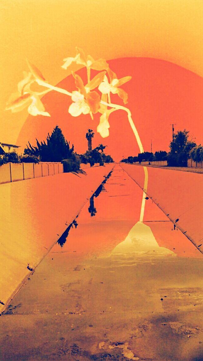 Open Edit Dream States Surrealism Vivid Expression Creation Blood Orange Mind Sweep