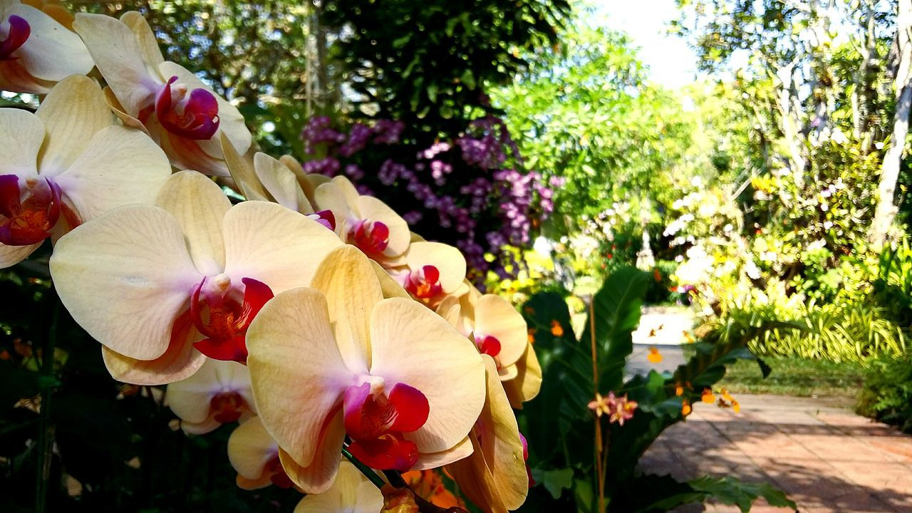 Travel Photography Travel Thailand Chiang Mai Orchid Island Orchids Collection Orchids Garden Orchid Flower Orchid Blossoms Orchids Orchid Flower Head Close-up Plant Growth Freshness Nature Fragility Beauty In Nature Flower Tree
