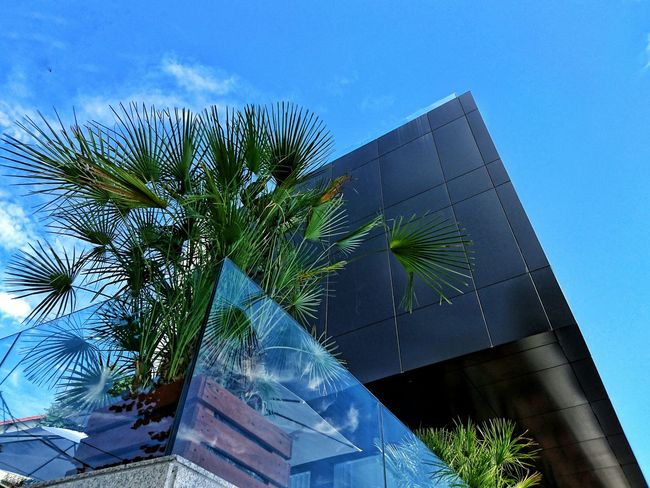 Low Angle View Palm Tree Blue Sky Growth Built Structure Architecture Building Exterior Tall - High Outdoors Nature Day Modern No People Green Color Green Cloud - Sky Palm Frond
