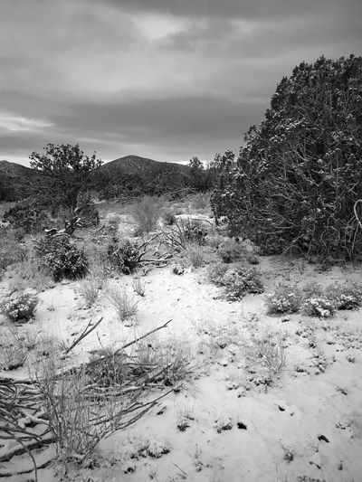 """""""After The Storm"""" Snow blankets the ground, downed wood and trees in the Juniper Woodlands of Central New Mexico after a storm. New Mexico Photography New Mexico Skies New Mexico Blackandwhite Photography Black And White Blackandwhite Nature Winter Tranquil Scene Snow Tranquility No People Sky Scenics Landscape Mountain Cloud - Sky Tree Cold Temperature"""