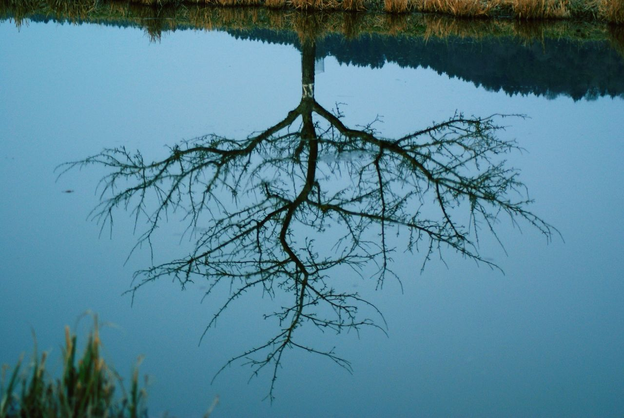Water Reflections Tree River Looking At Life Upside-down Spring Sky And Tree Mühlhausen Lights And Shadows Today's View