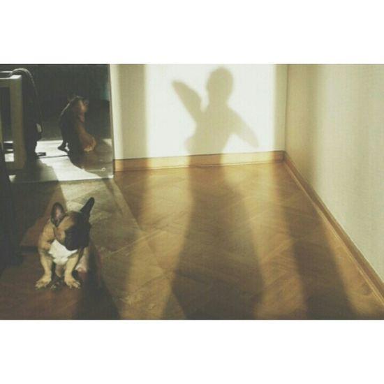 Shadow Girl Polishgirl Women Selfportrait Selfie Dog Frenchbulldog My Best Photo 2015