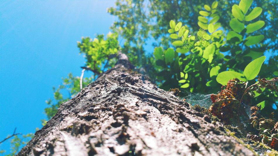 Nature Photography Tree SPAIN Acoruña First Eyeem Photo
