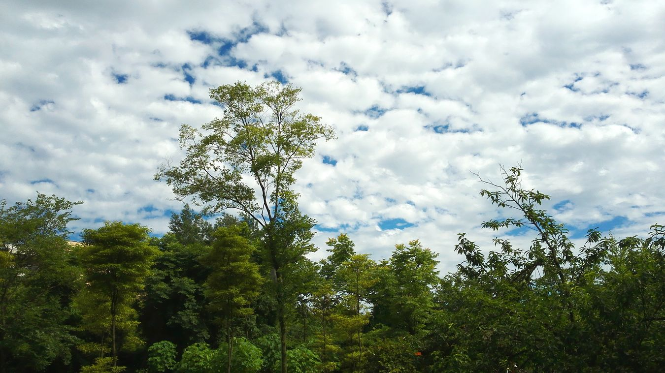 Out Of Window Trees Heading Sky And Clouds Scenery