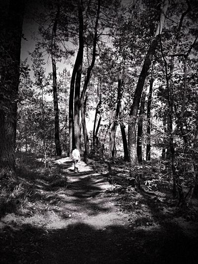 Walking Tree Forest Nature Tranquility The Great Outdoors - 2017 EyeEm Awards Beauty In Nature Blackandwhite Photography Noiretblanc BYOPaper! Shootermag_france AMPt_community