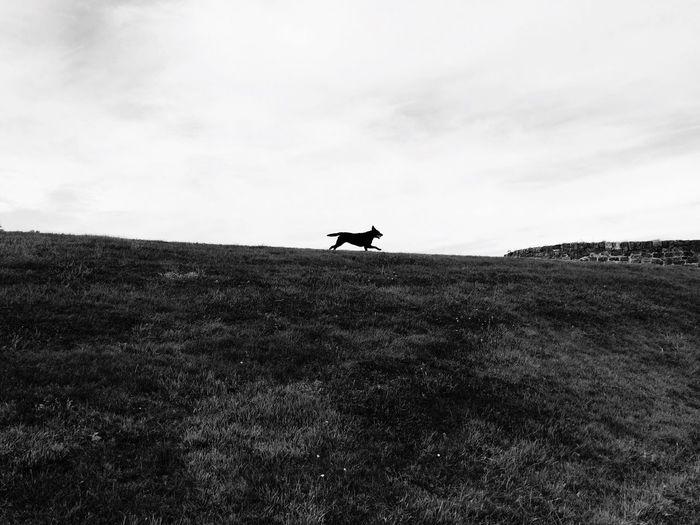 Running hills my dog