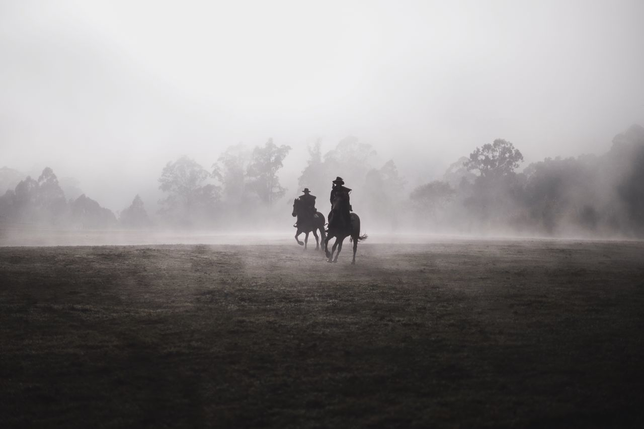 🐎 I definitely need more fog in my life! LUMIX GX8 Lumix Horses Minimalism Horse Riding Service Animals Deceptively Simple EyeEm Schwarz The Great Outdoors With Adobe The Great Outdoors - 2016 EyeEm Awards