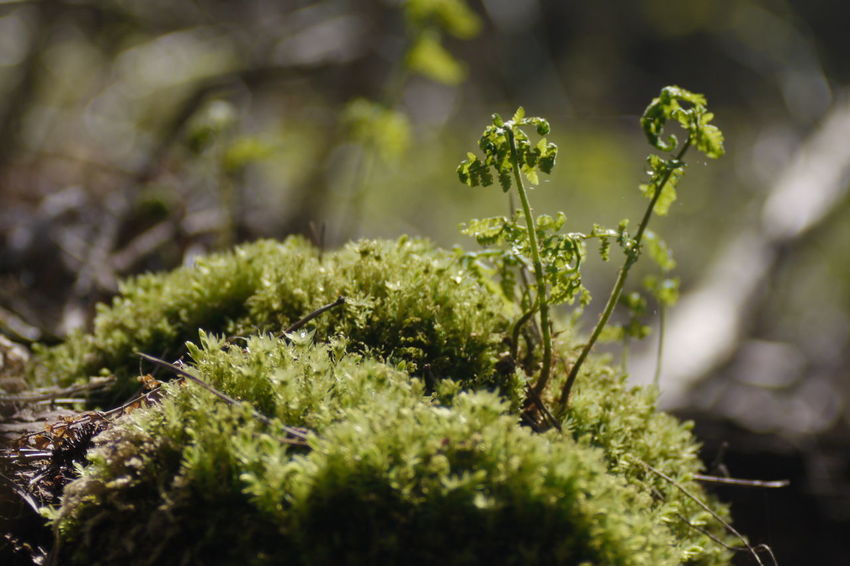 Beauty In Nature Close-up Darß Day Freshness Growth Moos Nature No People Outdoors Plant