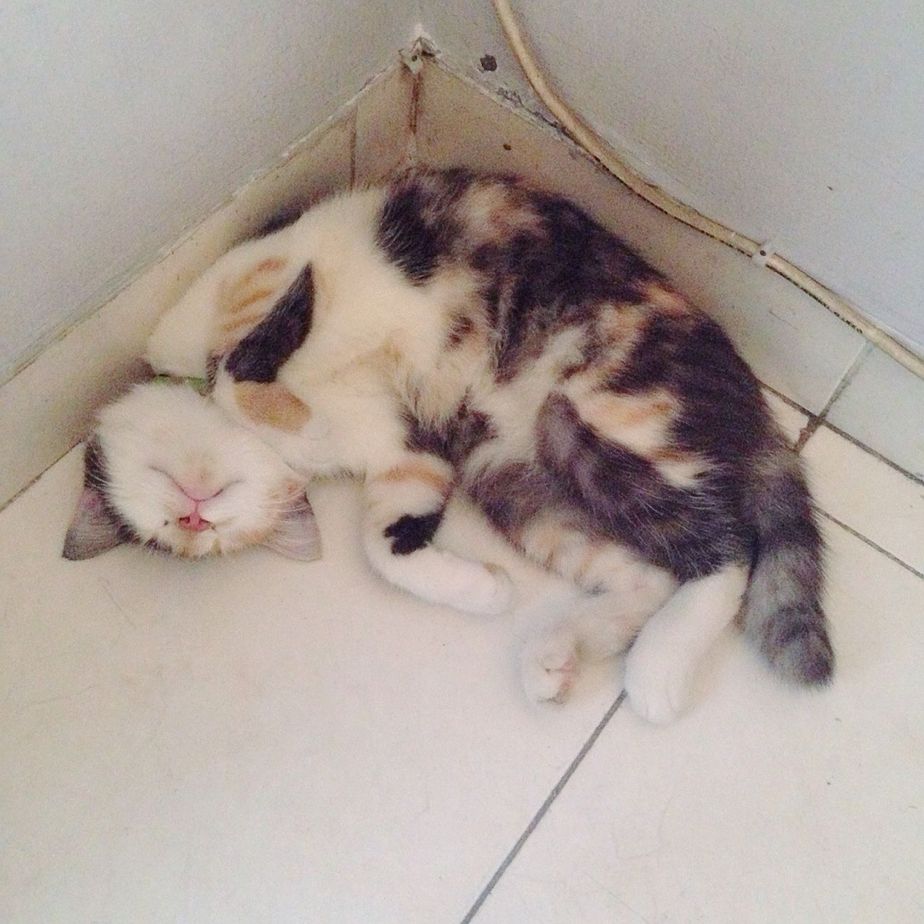 Blinky tidur di sudut ruang tamu. Hobbies By ITag Familia By ITag Made In Driaz By ITag The Families By ITag Animal By ITag Pets By ITag