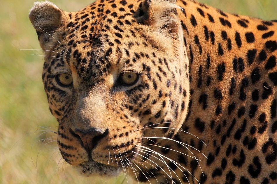 Beautiful stock photos of africa, Animal Markings, Animal Themes, Animal Wildlife, Animals In The Wild