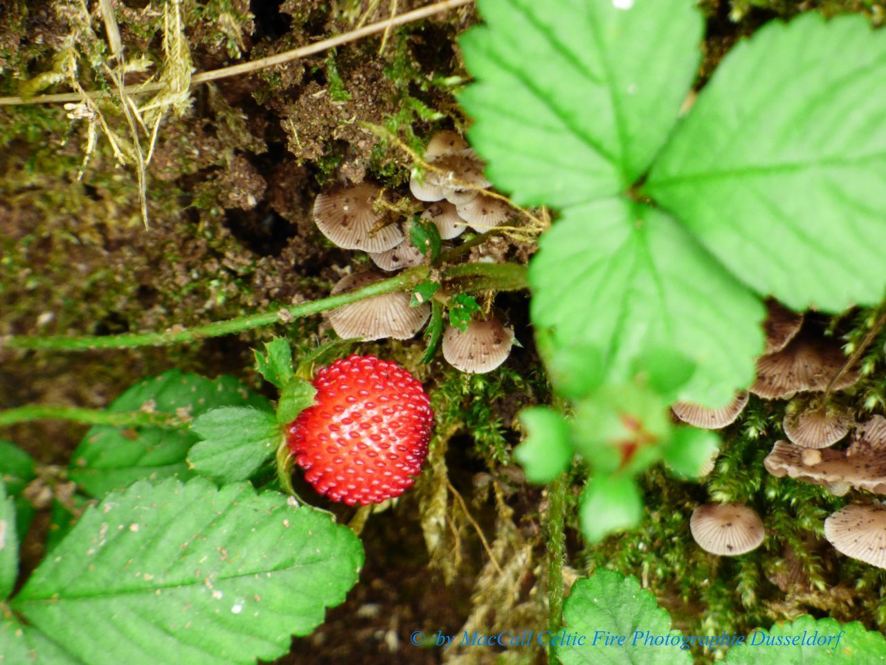 growth, leaf, nature, green color, freshness, close-up, day, no people, beauty in nature, food and drink, fruit, outdoors, plant, fragility, mushroom, fungus, food, toadstool