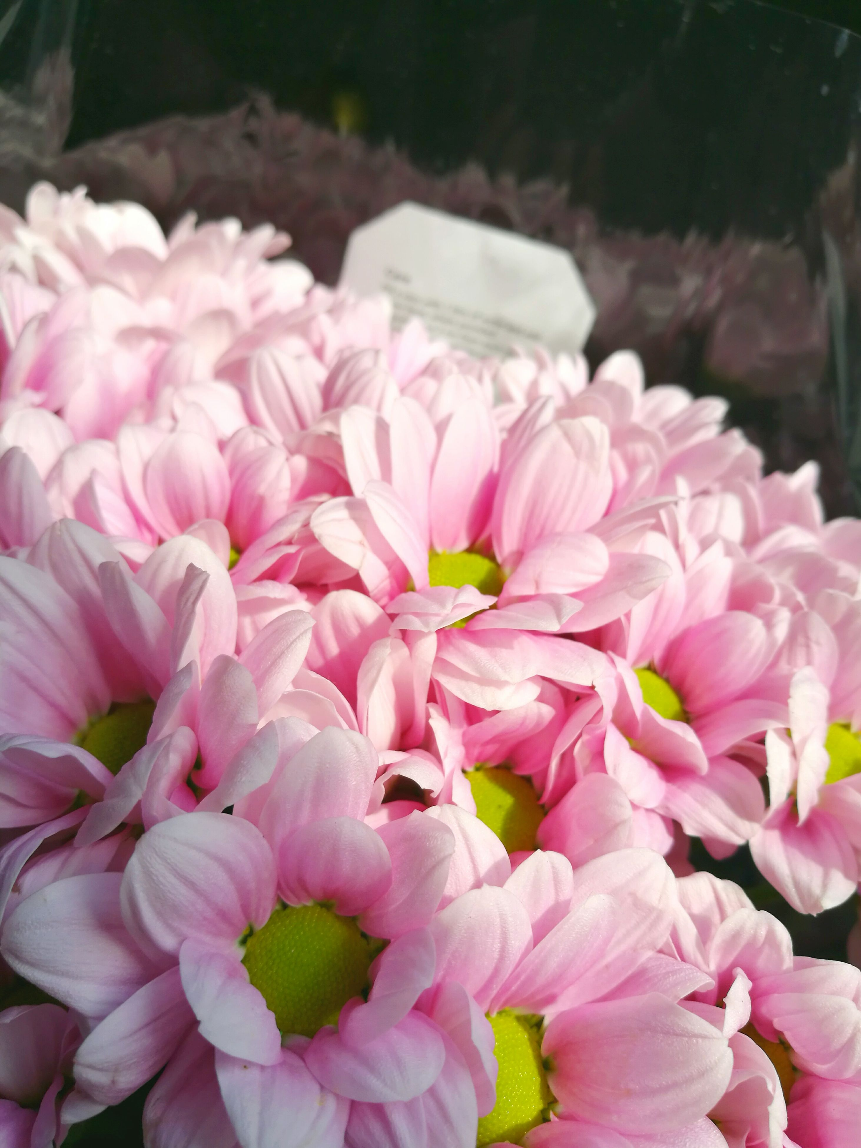 flower, freshness, petal, fragility, pink color, beauty in nature, close-up, flower head, nature, springtime, pink, growth, selective focus, bunch of flowers, abundance, in bloom, focus on foreground, day, softness, large group of objects, blossom, botany, bloom, multi colored, no people, vibrant color