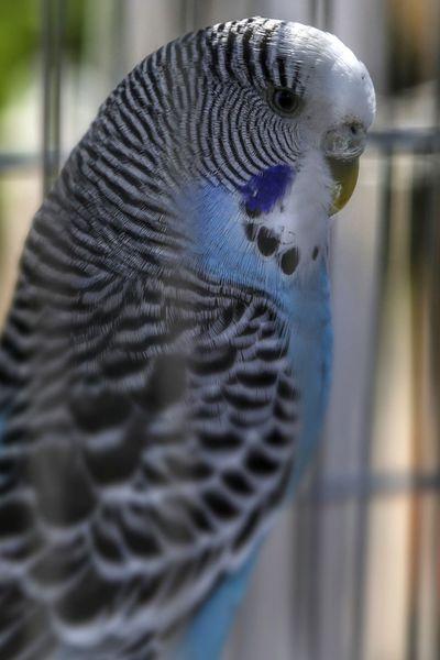 One Animal Animal Themes Close-up Animals In Captivity Animal Wildlife Bird No People Day Animals In The Wild Nature Indoors  Mammal