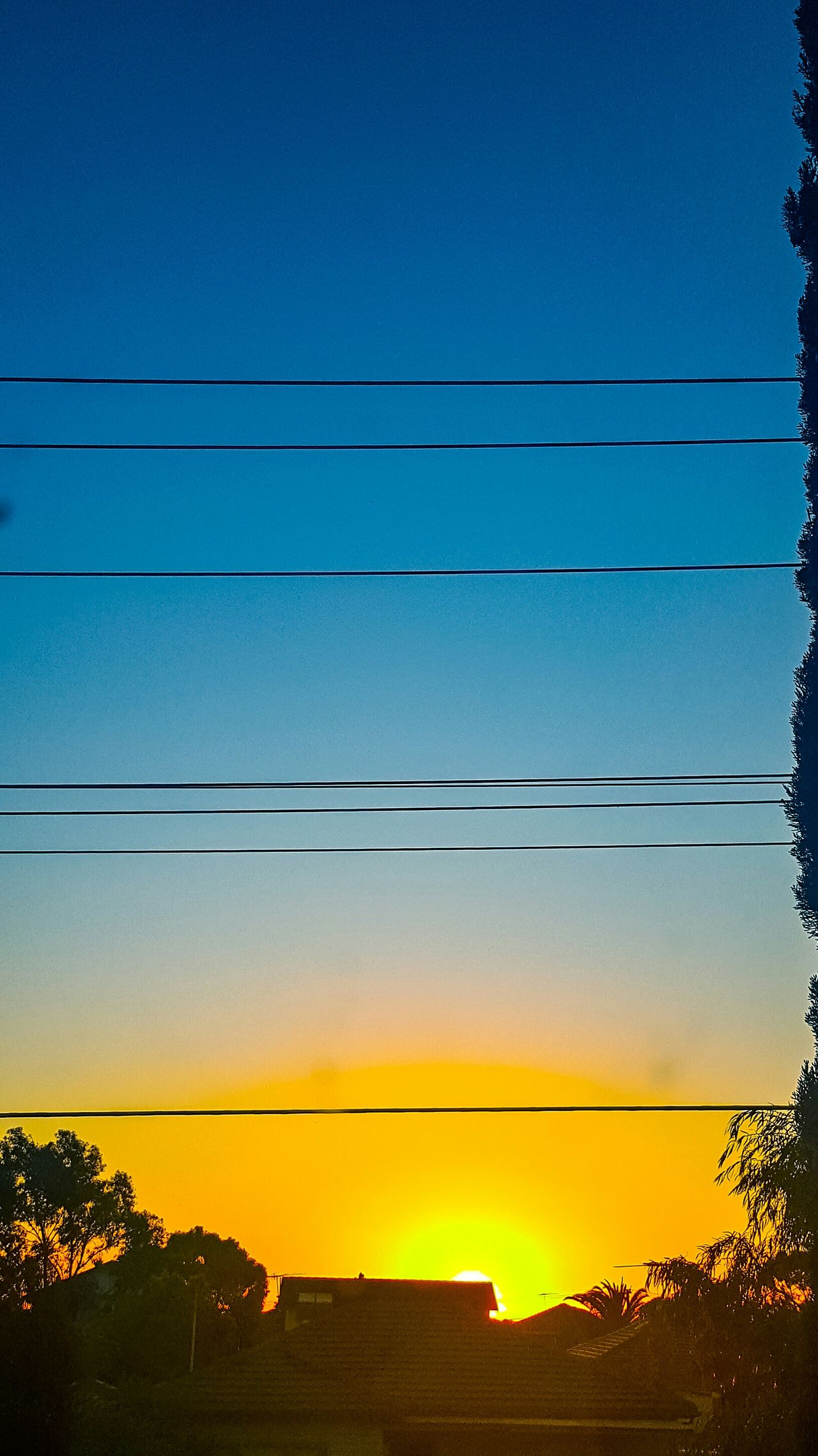 Sunsets with no clouds look so beautiful 😍😍 Tree Transportation Blue Cable Power Line  Land Vehicle Clear Sky Yellow Scenics Tranquil Scene Outdoors Sky Nature Tranquility No People Power Supply TakeoverContrast Capture The Moment Sunset Silhouettes Sunset EyeEm Best Shots Beauty In Nature Check This Out Majestic Snapshots Of Life
