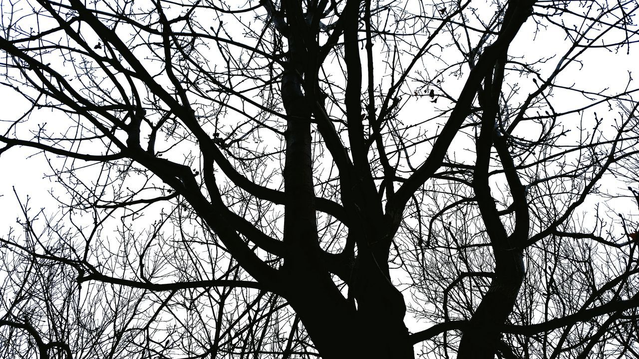🌳 Tree Low Angle View Branch Nature Sky No People Bare Tree Outdoors Day Close-up Beauty In Nature Silhouette Silhouette Photography Silhouette_collection Silhouettes Beauty Growth Monochrome Black And White Tree White Sky EyeEmNewHere