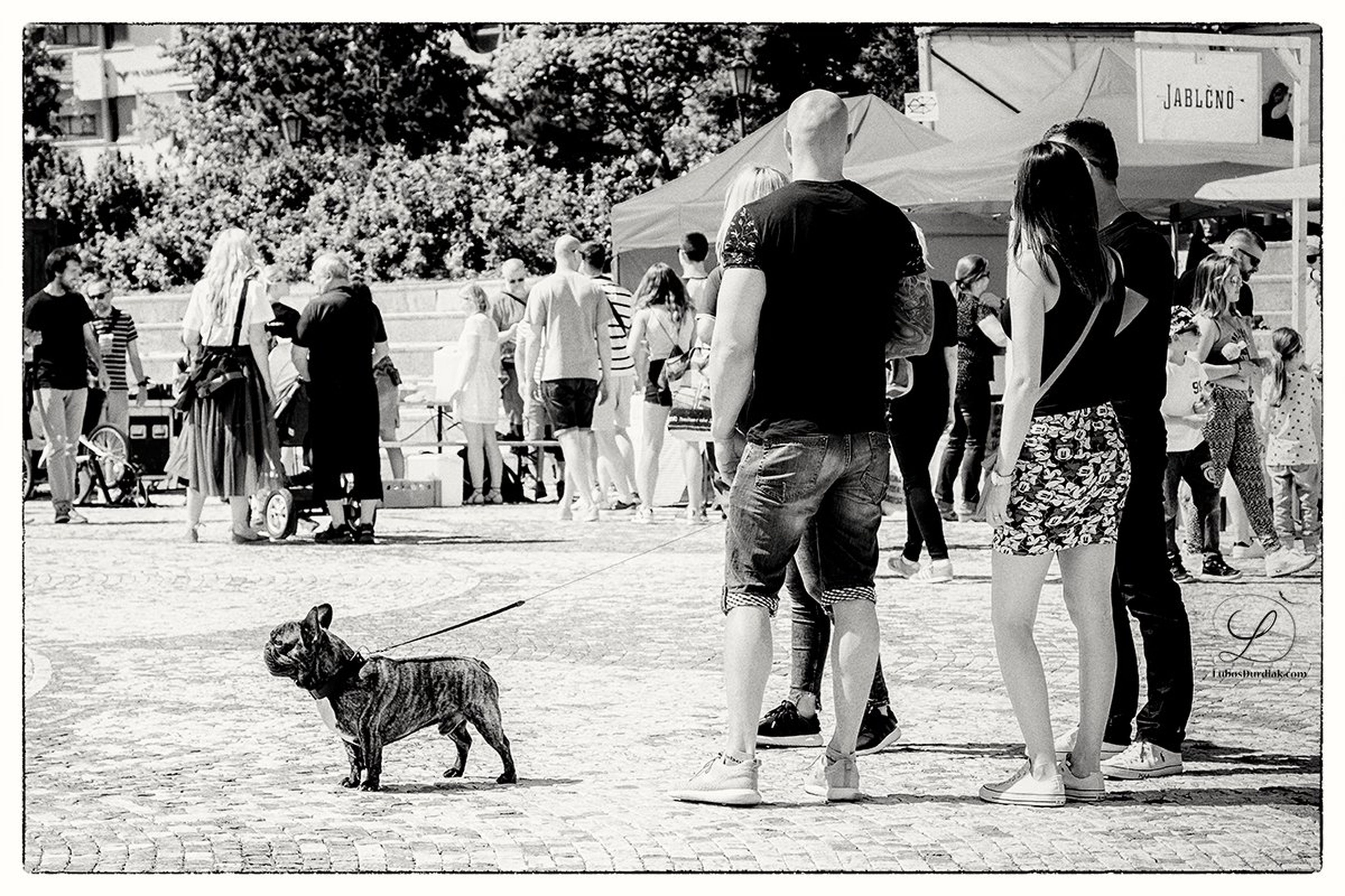 dog, large group of people, pets, one animal, domestic animals, walking, real people, women, men, leisure activity, full length, outdoors, mammal, day, lifestyles, crowd, people, adult, adults only