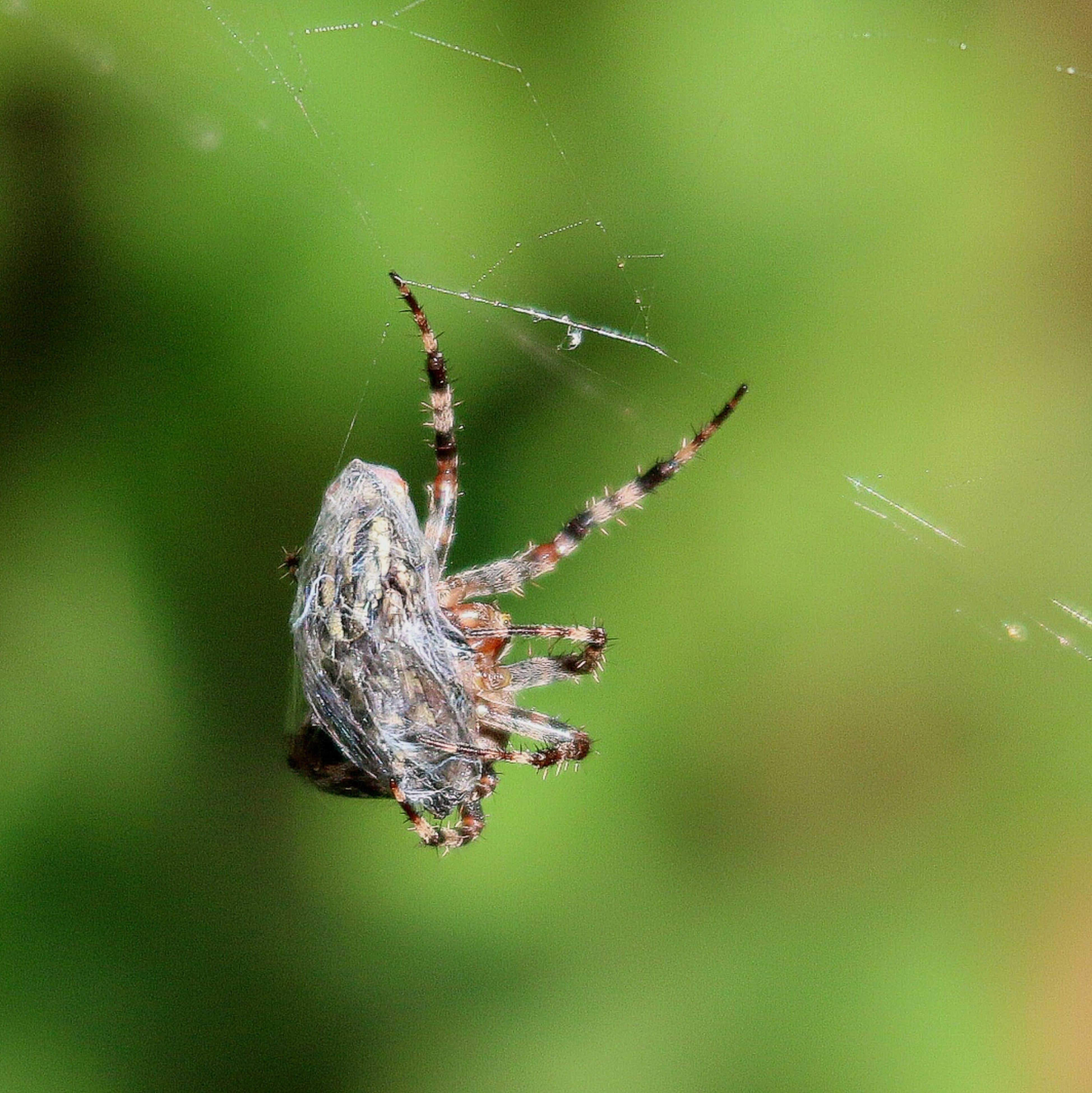 focus on foreground, close-up, spider web, drop, water, fragility, animals in the wild, selective focus, nature, animal themes, insect, spider, wet, wildlife, day, beauty in nature, outdoors, plant, one animal, no people