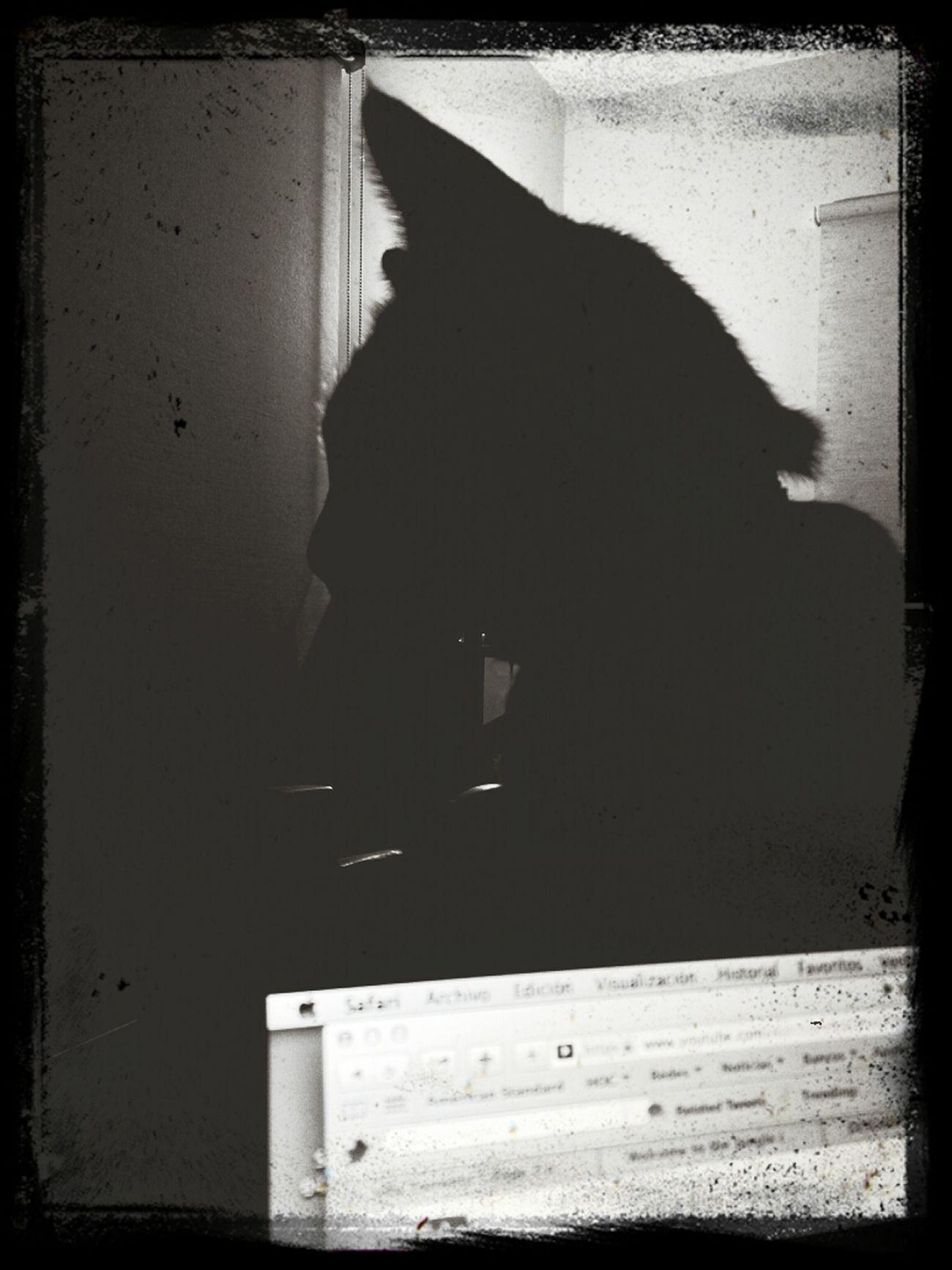 shadows Cats
