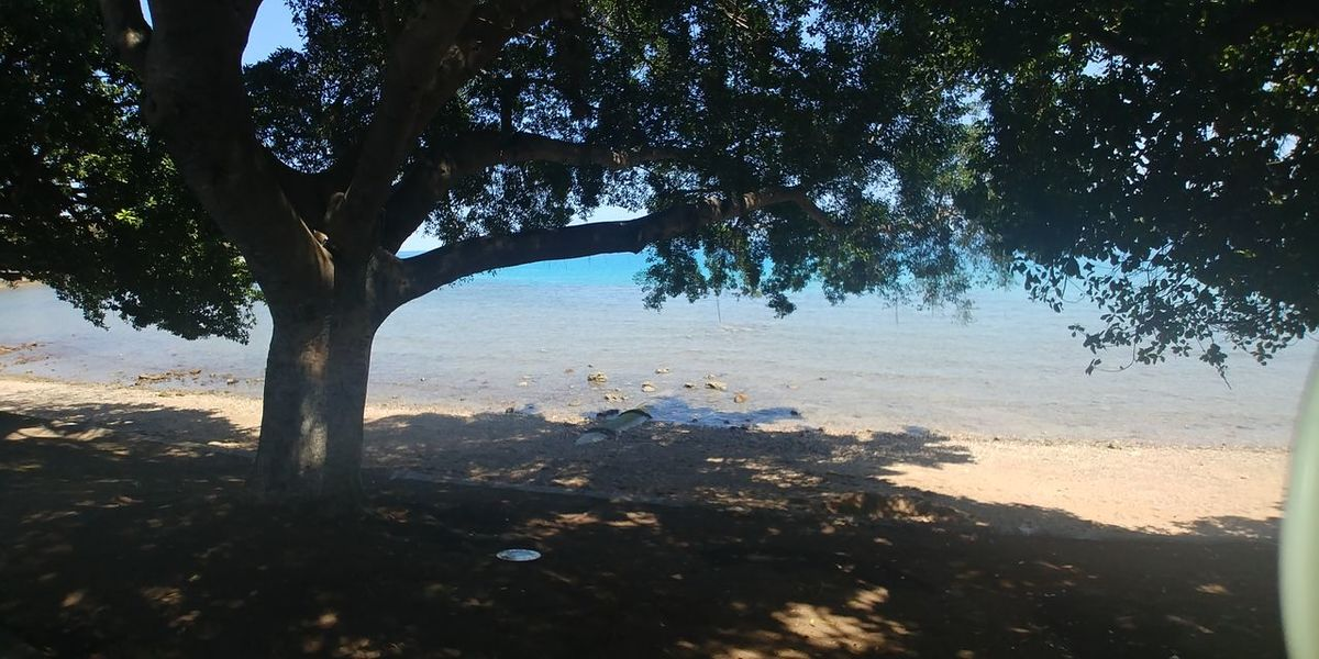 Tree Nature Outdoors Water Beach Day Landscape No People Scenics Tree Trunk Sea Beauty In Nature Shadow Sky