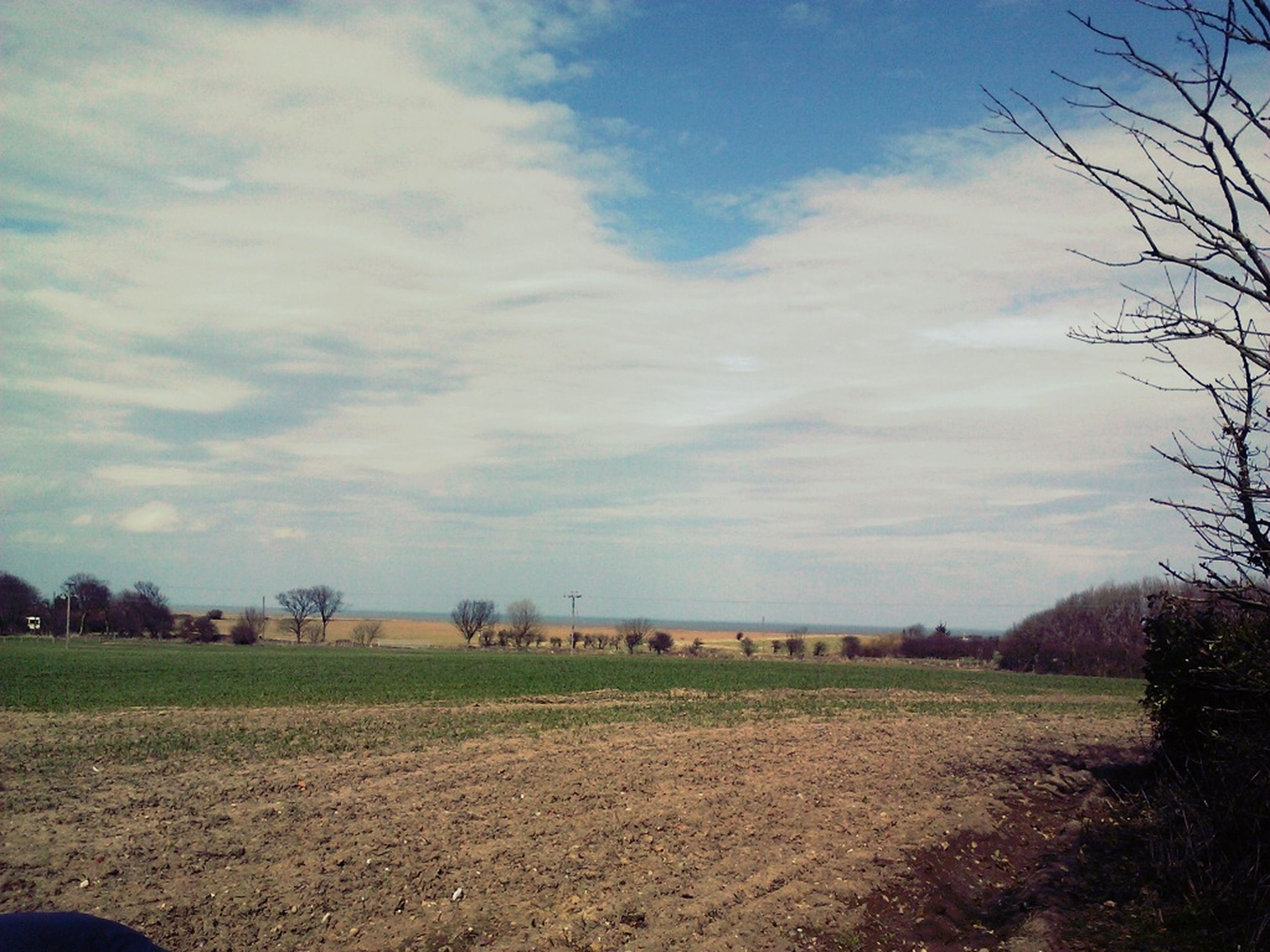 sky, field, landscape, cloud - sky, tranquil scene, tranquility, tree, grass, scenics, cloud, nature, beauty in nature, cloudy, rural scene, day, grassy, growth, outdoors, bare tree, no people