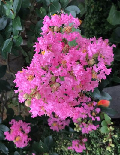 Flower Growth Beauty In Nature Nature Pink Color Freshness Petal Blossom Blooming Flower Head Breathing Space