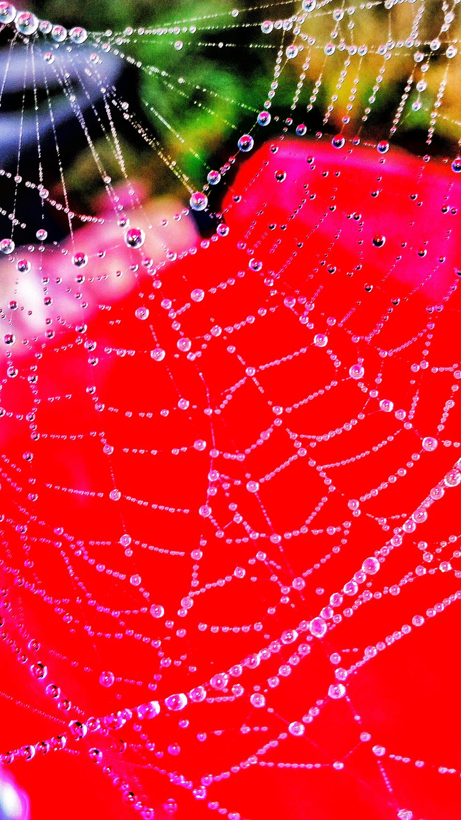 Maximum Closeness Macro Spider Web Close-up Dew Drops On Spider Web Foggy Morning Dewdrops Shapes And Forms Fragility Complexity Pattern Animals In The Wild Beauty In Nature Web Water Red Red Background Outdoor Textured  Nature Designs In Nature Patterns In Nature Sunrise Wet Dawn