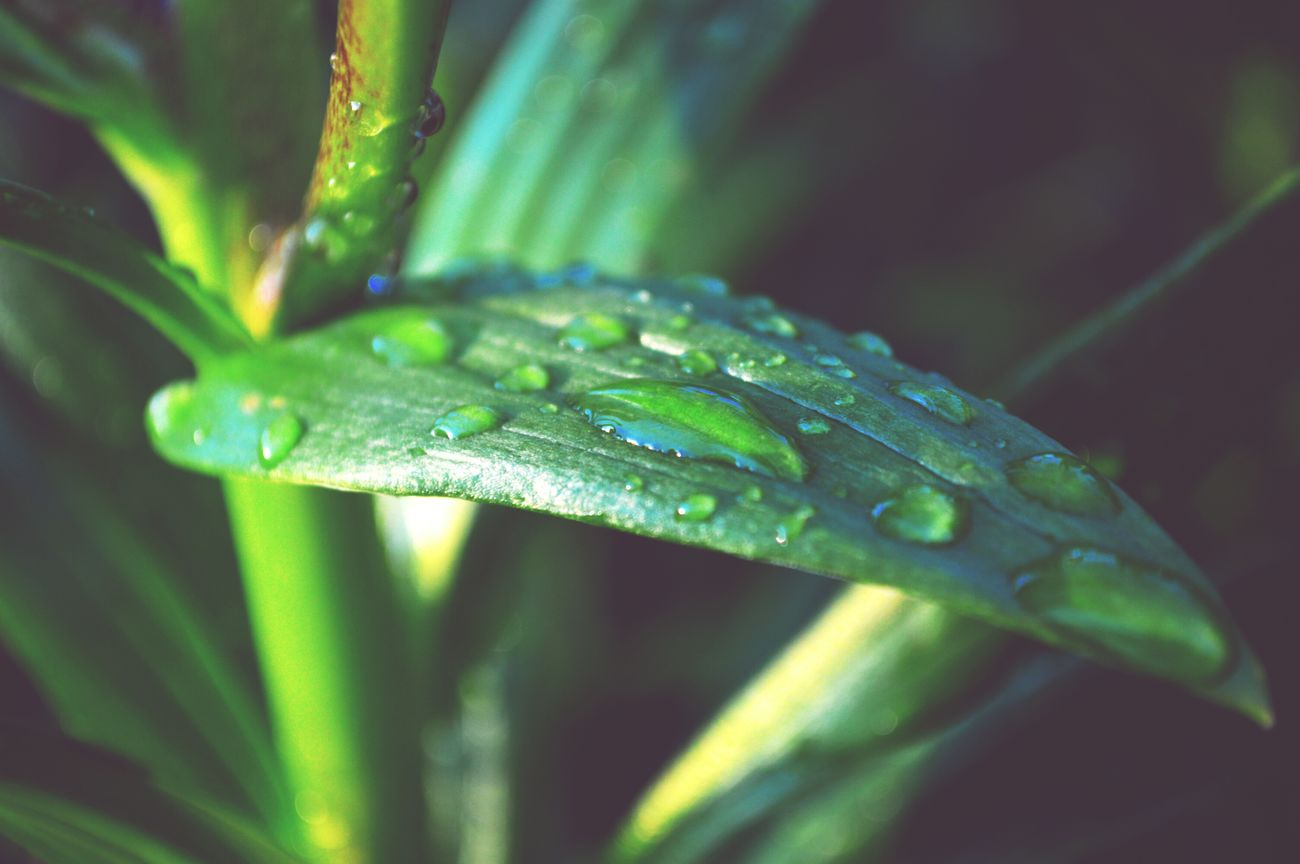Leaf Nature Green Color Plant Water No People Outdoors Beauty In Nature Day Drops_perfection Drops💧 Sunnyday☀️ Hobbyphotography Nikon D3200 Nikonphotography Hello World ✌ Growth Naturelovers My Photography Poland Myhome Around My Home Myhobby Yeah! Nature