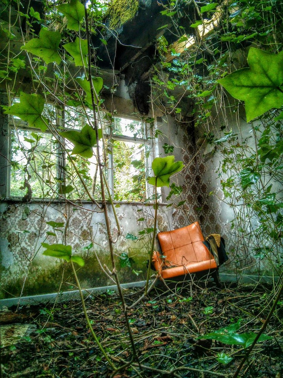 Chair In Room Abandoned Derilict Ivy Vines Retro Styled Orange Chair Distressed Broken Window Hole In Roof State Of Disrepair Original Experiences 43 Golden Moments The Innovator Feel The Journey Showcase June Fine Art Photography Home Is Where The Art Is Hidden Gems  Eyeemphoto Pivotal Ideas Color Palette TakeoverContrast The Secret Spaces Art Is Everywhere Break The Mold TCPM