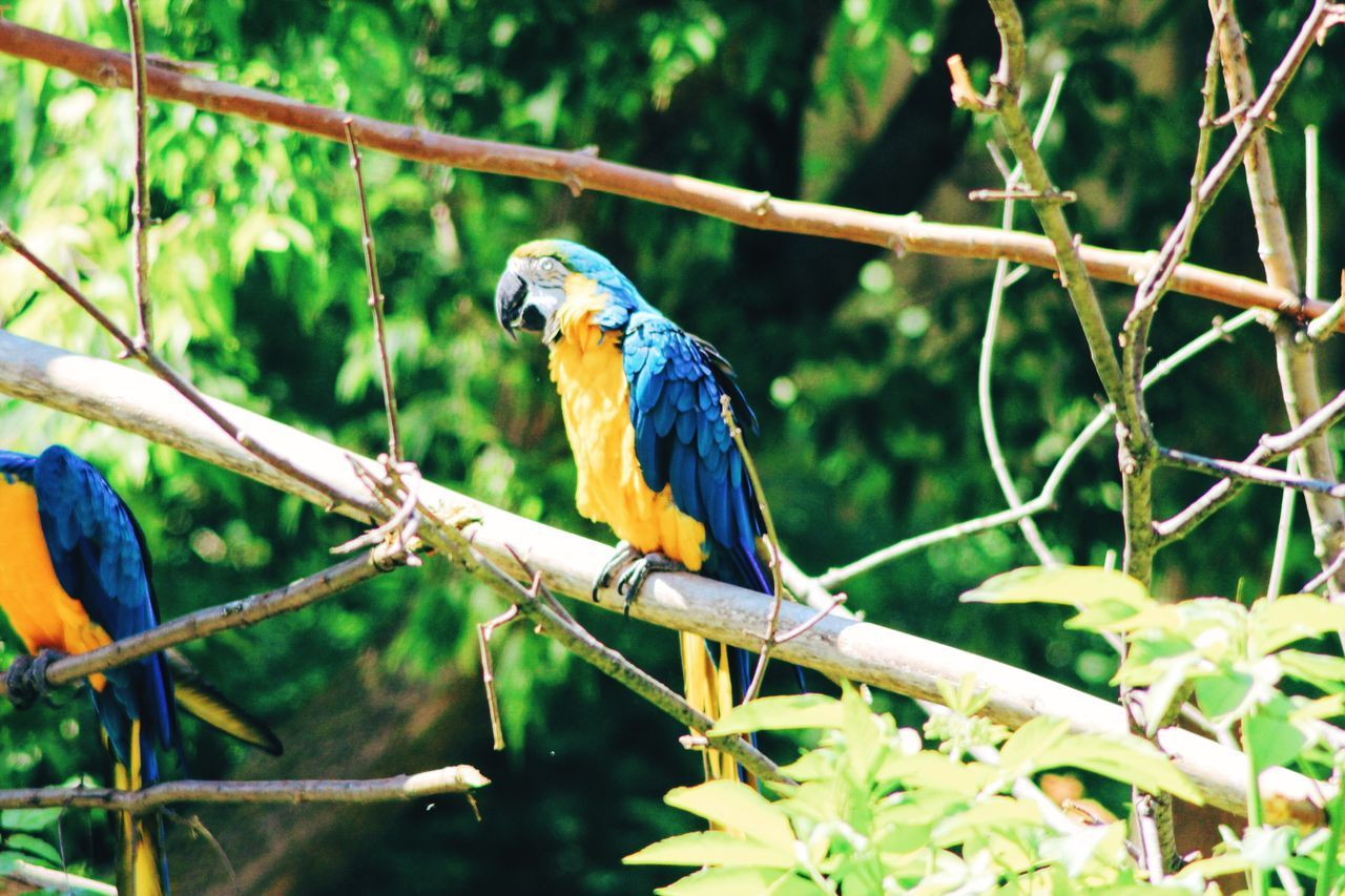 One Animal Animal Themes Bird Perching Animals In The Wild Branch Focus On Foreground Nature Beak Day Vibrant Color Beauty In Nature Green Color Zoology Parrot Jungle Exotic Exotic Creatures Animals In The Wild