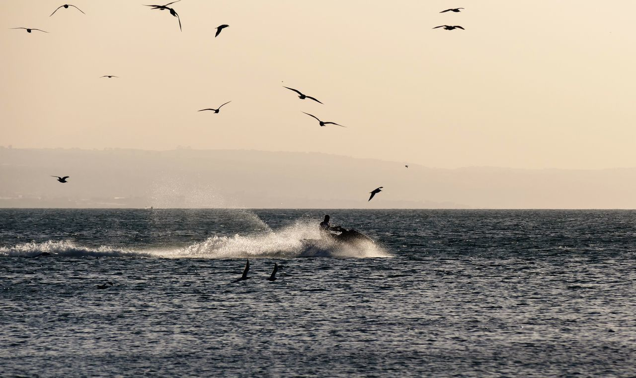 Animal Themes Animal Wildlife Animals In The Wild Beauty In Nature Bird Day Flock Of Birds Flying Jet Ski Jetsky Morning Morning Light Nature No People Outdoors Scenics Sea Sky Sunset Water Water Sports Wave