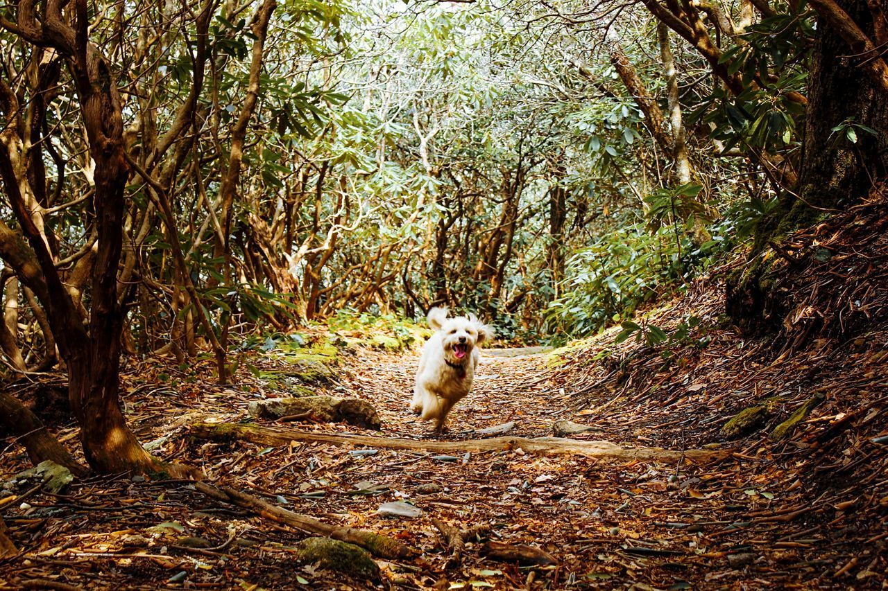 Dog Running On Countryside Road Along Trees