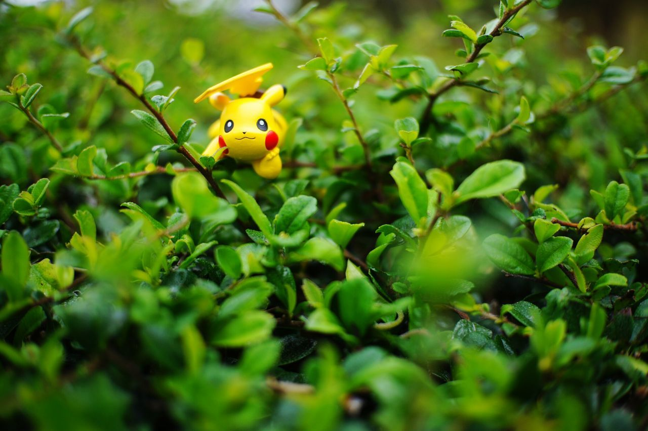 Tree Nature Close-up Day Green Color Growth Figurine  Pikachu Pikachu ❤