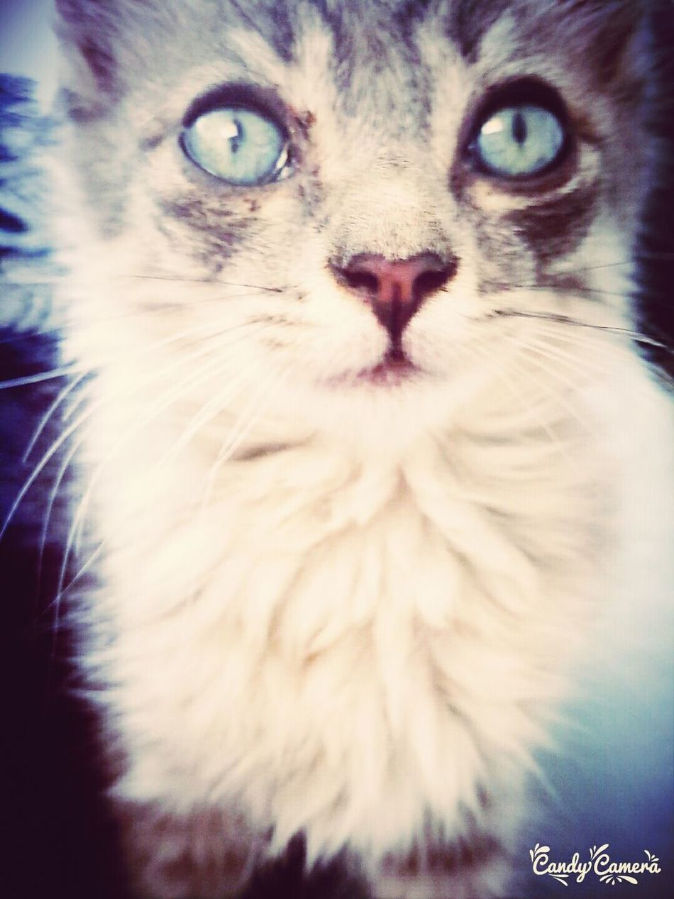 Cat♡ Allround The World Cute Pets!:)