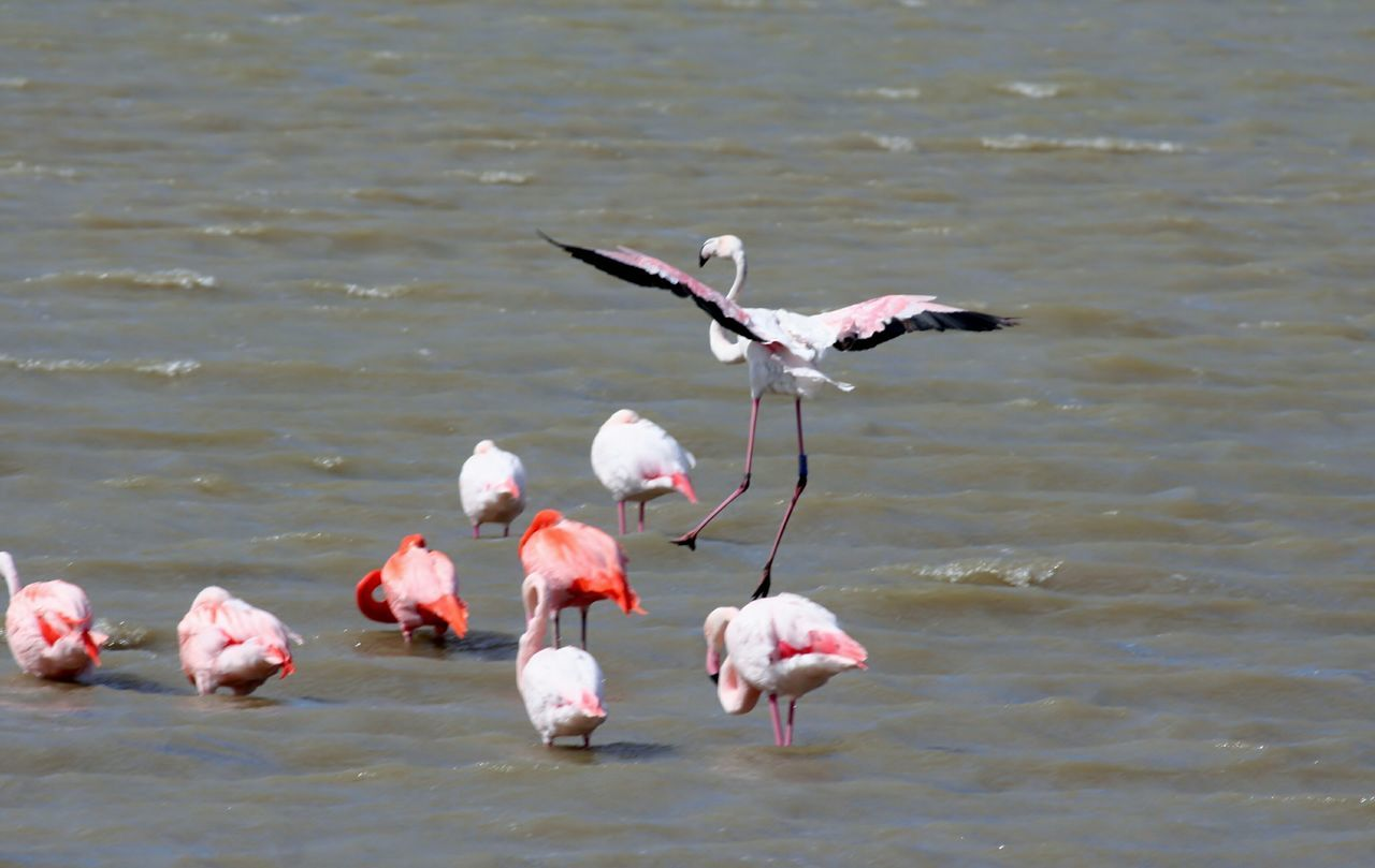 Pink Flamingos Flamant Rose Pink Flamingo