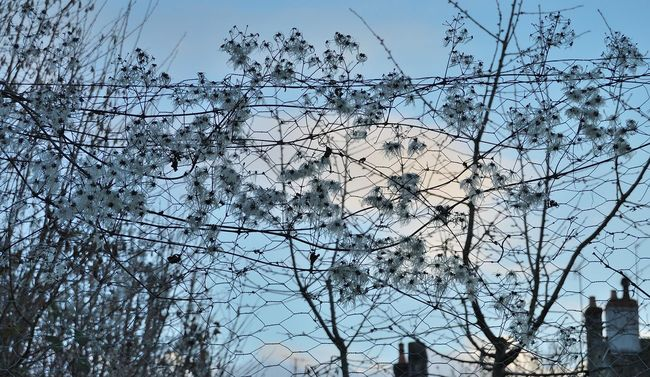 Branch Cheminées Ciel Clamecy Clématite Haie Haie Sauvage Nature Outdoors Toits Tree Winter Yonne