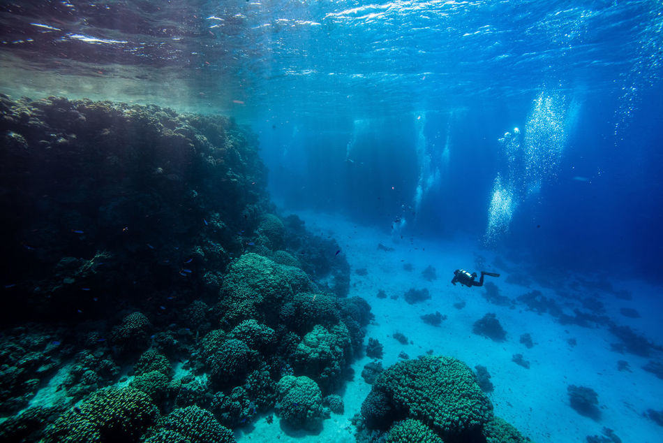 red sea Adventure Aquatic Sport Beatiful Nature Coral Escape Exploration Explorer Extreme Adventures Light And Shadow Nature Ocean One Person Real People RedSea Scuba Diving Scubadiving Sea Sea Life Solo Traveller Swimming Travel Photography UnderSea Underwater Unusual Beauty Water
