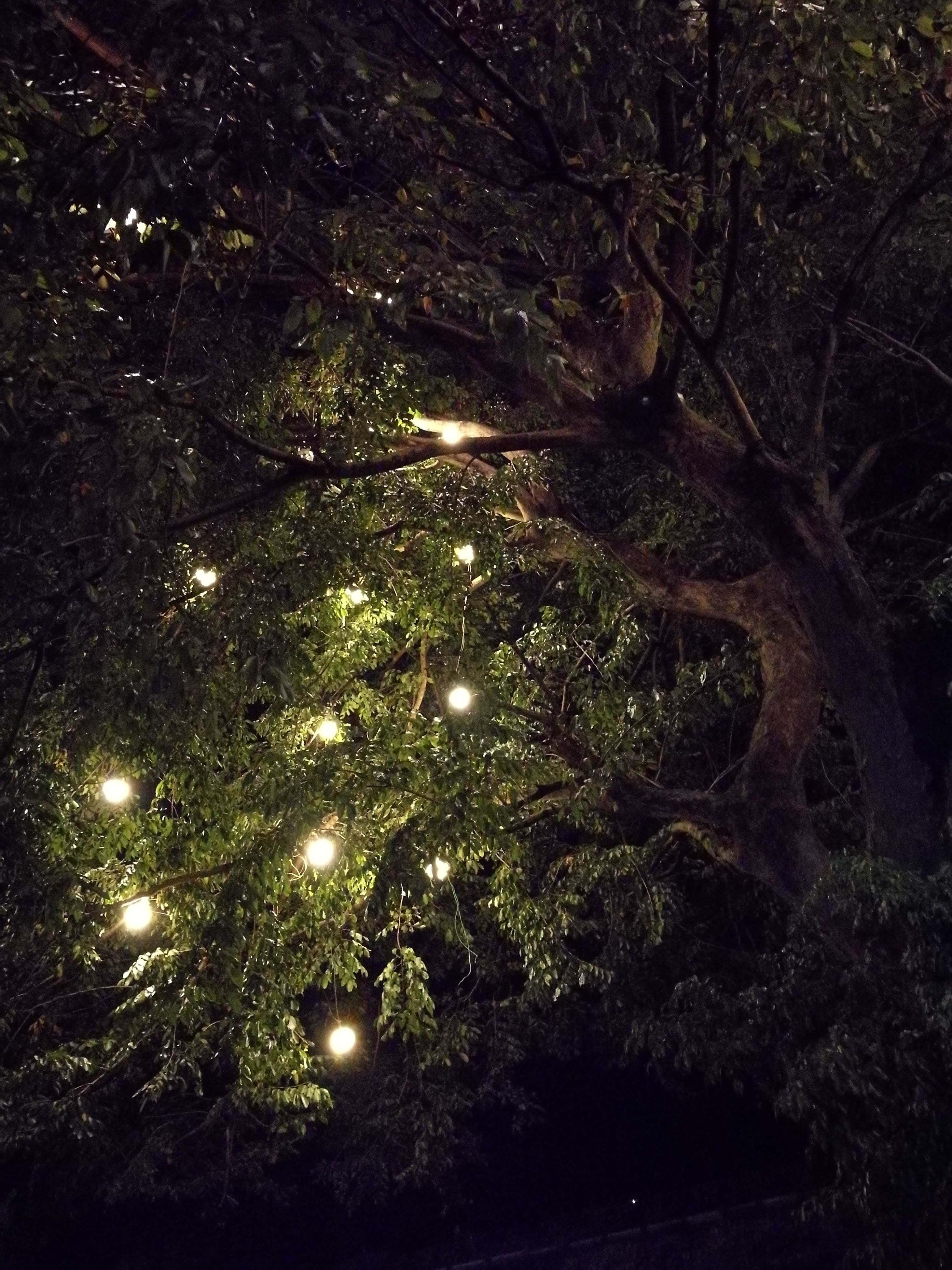 no people, night, low angle view, tree, nature, illuminated, full frame, outdoors, scenics, sky, glittering, backgrounds, beauty in nature, star - space, christmas, christmas decoration, astronomy, close-up, galaxy