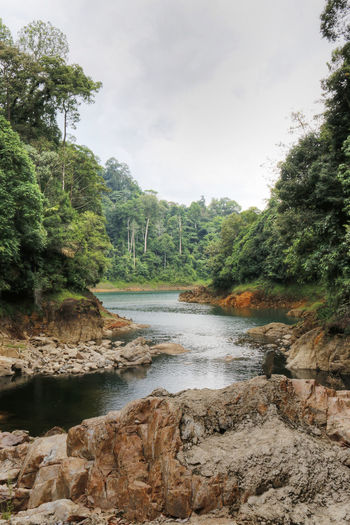 Day Kenyir Kenyir Lake Nature Nature No People Outdoors Plant Rocks Sky Stream Tree Tropical Tropical Jungle Water Waterfall Wildlife & Nature