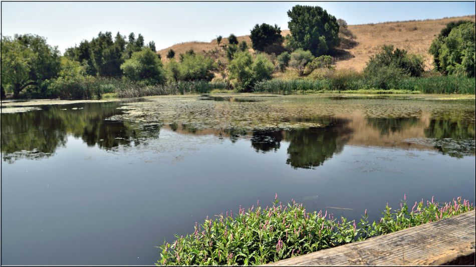 Hiking Garin 6 Garin Regional Park H.A.R.D Hayward Area Recreation Dept. Hayward, Ca. Hiking Adventures Hiking❤ Eastbay Hills Water Scenic Jordan's Pond Reflections In The Water Trees Reflected Glory Reflections Landscape Landscape_Collection Landscape_photography Nature Beauty In Nature Nature_collection Trees Schrubs Plants Tranquility